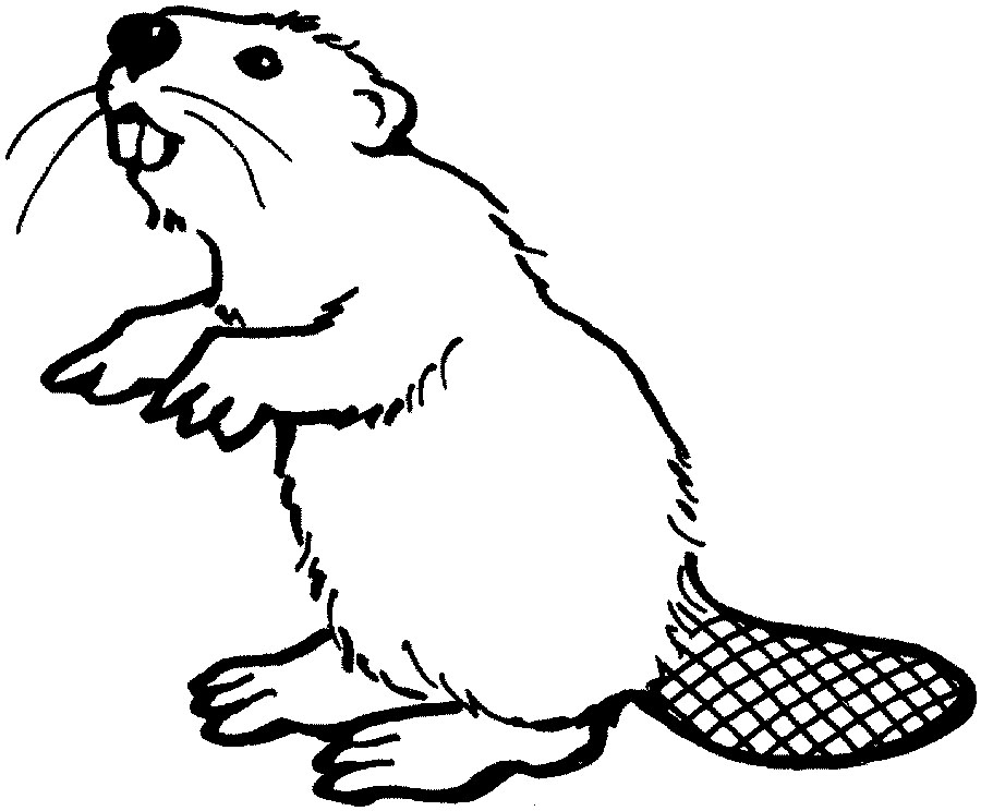 Beaver drawing outline - photo#6