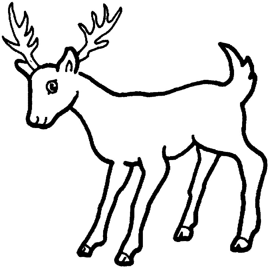 Print out and color pictures of a variety of animals